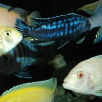 aquazoo-upstate-new-york-aquarium