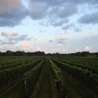 bedell-cellars-long-island-new-york