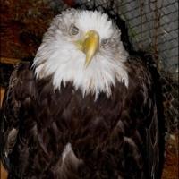 berkshire-bird-paradise-birding-upstate-ny