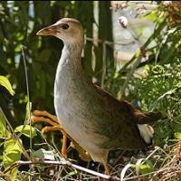 brooklyn-bird-club-bird-watching-brooklyn