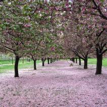 brooklyn-botanical-gardens-brooklyn-new-york