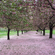 New york botanical gardens and arboretums ny botanical - Brooklyn botanical garden admission ...