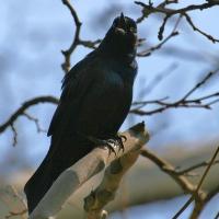 central-park-bird-watching-manhattan