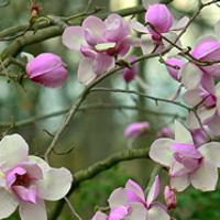 clark-botanical-gardens-long-island-new-york