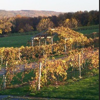 hunt-country-vineyards-upstate-new-york