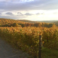 millbrook-vineyards-and-winery-upstate-new-york