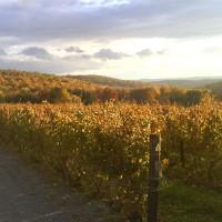 millbrook-vineyards-and-winery-upstate-new-york