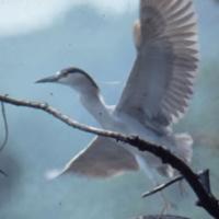prospect-park-bird-watching-nyc