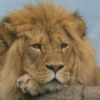 rosamond-gifford-zoo-upstate-ny