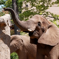seneca-park-zoo-in-upstate-new-york