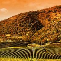 staten-island-winery-ny