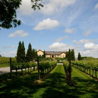 wolffer-estate-vineyard-long-island