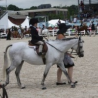 get-over-it-and-ride-horseback-riding-staten-island