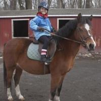 riverdale-equestrian-centre-horseback-riding-bronx