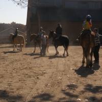 sweet-hills-stables-horse-riding-in-long-island