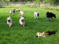 dog parks in ny