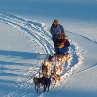 golden-arrow-dog-sled-rides-upstate-ny