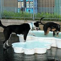 leroy-street-dog-park-nyc