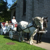 andrusz-horse-drawn-carriages-for-weddings-upstate-ny