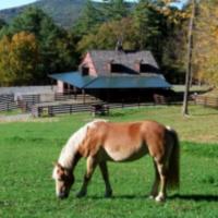 pony-parties-nyc-pied-piper-pony-rides
