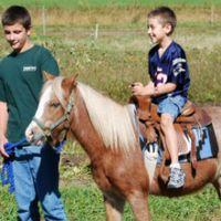 horse-sleigh-farm-ny