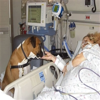 The-Good-Dog-Foundation-Animal-Assisted-Therapy-in-NY