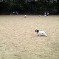 dog- run- 105-_Dog_Park-_New_York