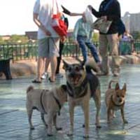 fish- bridge- park- dog- run-_Dog_park-_New_York