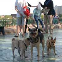 fish- bridge- park- dog- run-_Dog_park-_New_York