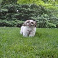 seton- park-_Dog_Park-_New_York