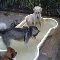 the- tompkins- square- dog- run-Dog_park-_New_York