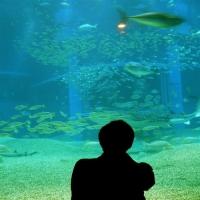 adventure-aquarium-new-jersey-attractions
