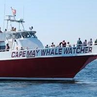 cape-may-whale-watcher-outdoor-adventures-nj