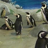 jenkinsons-aquarium-top-25-attractions-nj