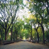 central-park-dating-in-ny