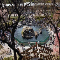central-park-zoo-new-york-sightseeing-in-ny