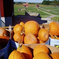 critz-farms-halloween-attractions-in-ny