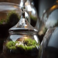 twig-terrariums-group-activities-in-ny