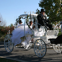 bee-tree-trail-carriage-and-wagon-tours-horse-drawn-carriages-for-weddings-in-ny