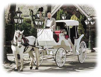 central-park-carriages-horse-drawn-carriages-for-weddings-in-ny