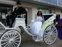 ponies-will-travel-horse-drawn-carriages-for-weddings-in-ny