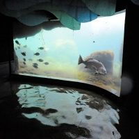the-new-york-aquarium-rainy-day-activities-in-ny