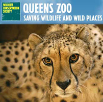 Queens Zoo in NY Educational Attraction