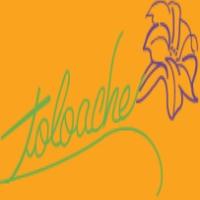 Toloache Best Mexican Restaurants NY