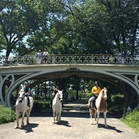 chateau-stables-nyc-horseback-riding