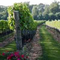 Beneduce-Vineyards-New-Jersey-Attractions