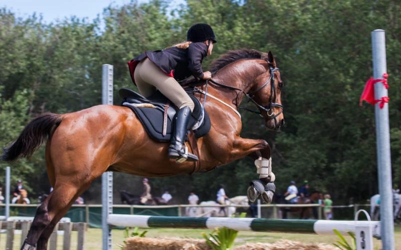 horseback riding ny